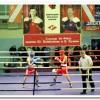В Люберцах состоялся традиционный турнир по боксу