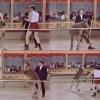 Вуди Аллен против кенгуру (видео)