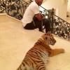 Флойду Мэйвезеру младшему в Москве подарили тигрицу