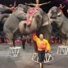 Бокс и цирк. Рухнут ли величайшие шоу на Земле?