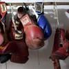 Полиция раскрыла картель, нелегально эксплуатирующий боксеров