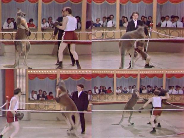 Вуди Аллен против кенгуру (видео) (1)