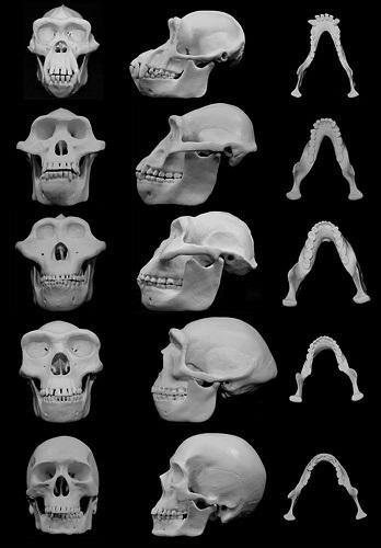 Удары по лицу и черепу создали облик современного человека (2)