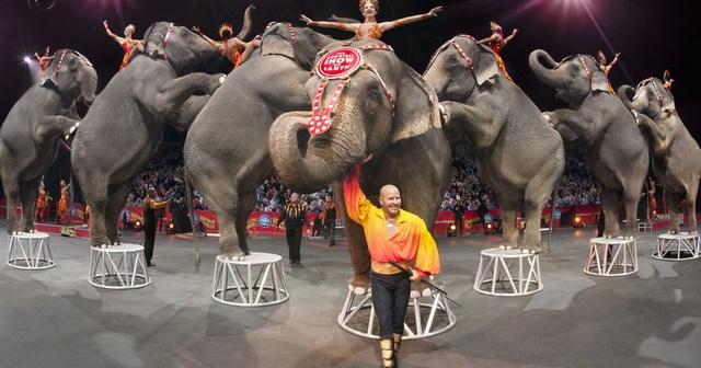 Бокс и цирк. Рухнут ли величайшие шоу на Земле? (1)